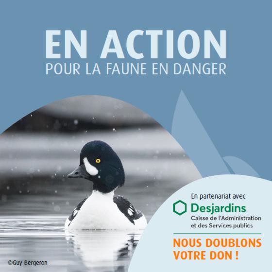 Campagne faune en danger
